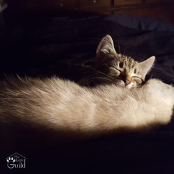 Kitten Bliss