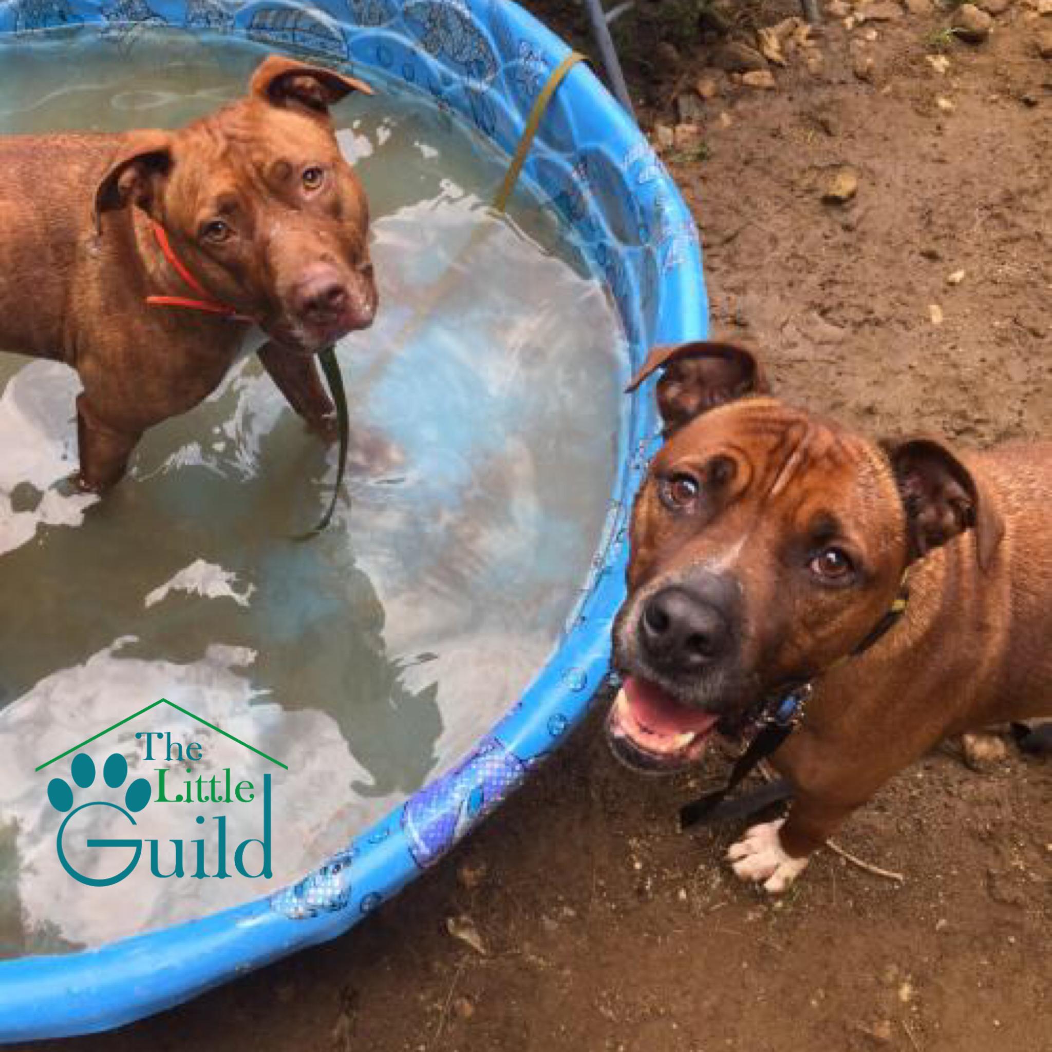 Dog Swim Team