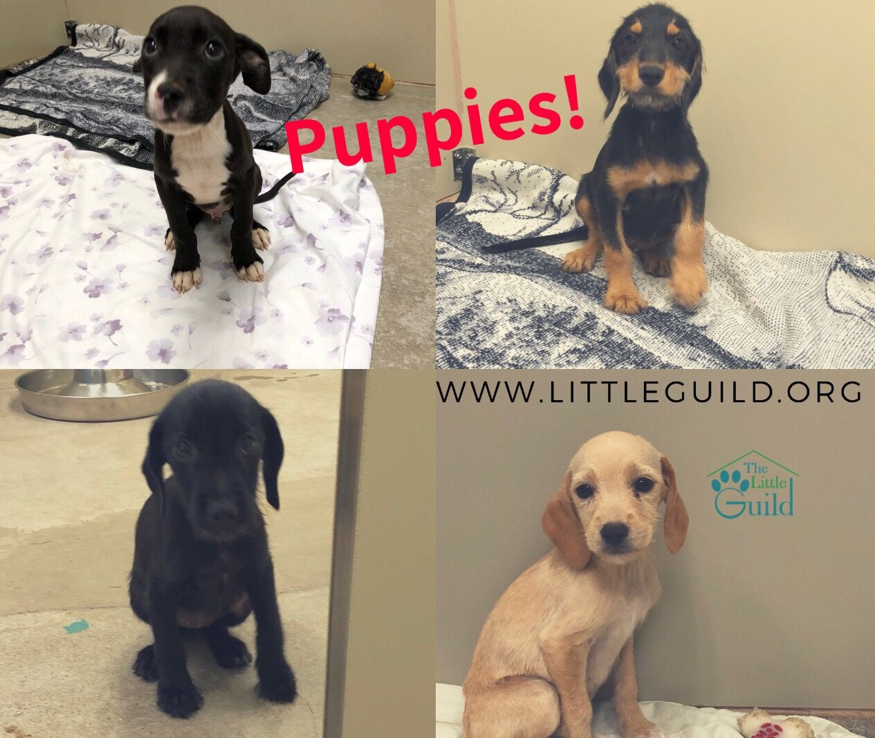 Animal Shelter | Cornwall | The Little Guild
