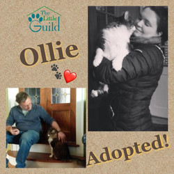 Sweet Ollie
