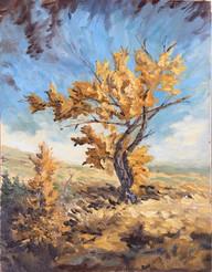 SOLD  Golden Tree, LS 64