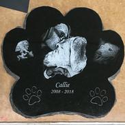 Callie .jpg
