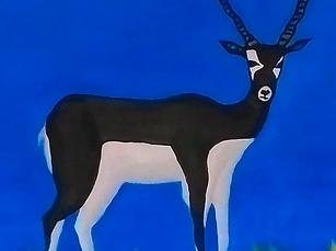 Antelope_02.png
