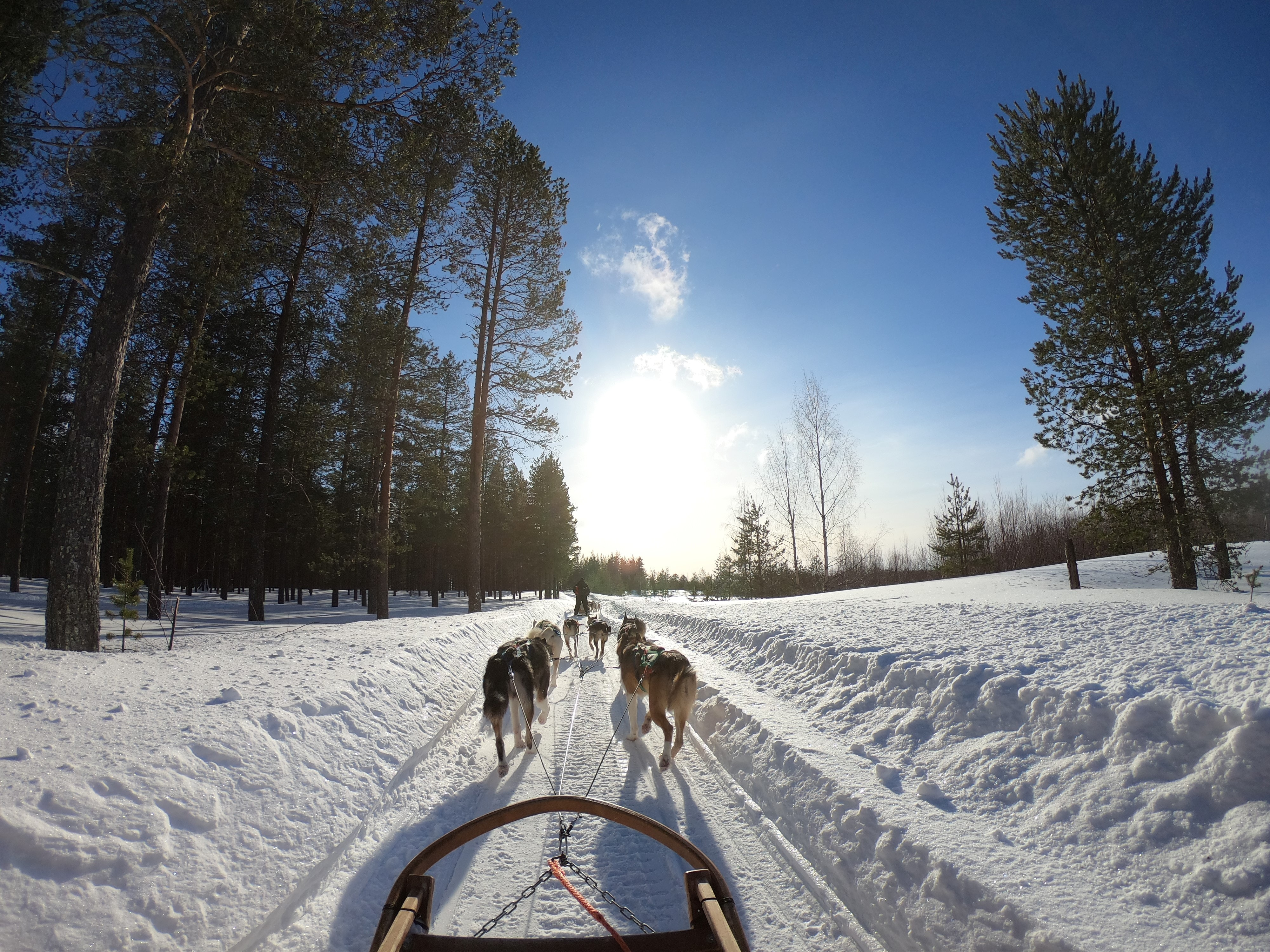 sled-pulled-by-dogs-2531014