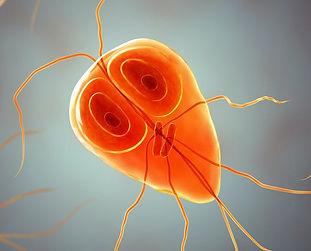 parasitos.jpg