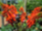 Flowering tree, small tree, hardy
