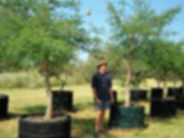 Monkey thorn for sale | Senegalia galpinii in 450L