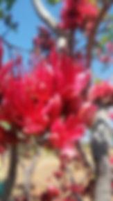 Blomdraende boom, baie gehard, bladwisselend