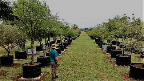 100L inheemse bome te koop. Gauteng