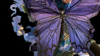 Blue Butterfly Meaning and Symbolism