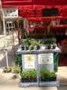 ハーブ&野菜苗を恵比寿マルシェで販売しました。