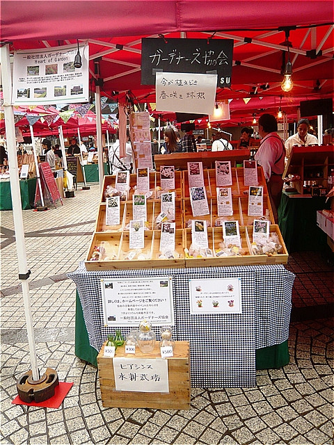 2015年11月15日・29日・12月6日に恵比寿マルシェで、春植え球根の販売をしました。