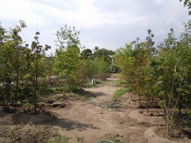 植栽の見学