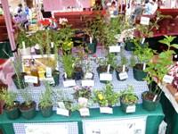 ハーブ&野菜苗に季節の花苗もプラスして、梅雨前の植え込み最後のチャンスを御提供しました。