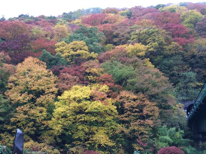 信州の気候と紅葉