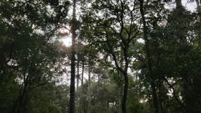 Resíduos Sólidos e Meio Ambiente