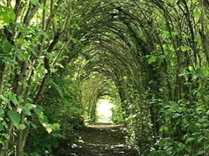 TreeTunnel.png