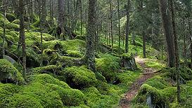 mountain forest.jpg