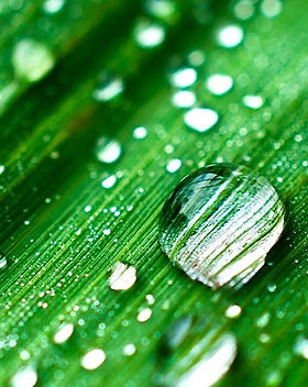 Rain-Water-Fragrance-Oil.jpg