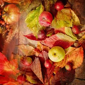 Fall_Magic__49842.1379807863.webp