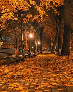 autumn_nights__84011.1467989254.webp