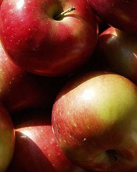 Mac_apple_1000px.jpg
