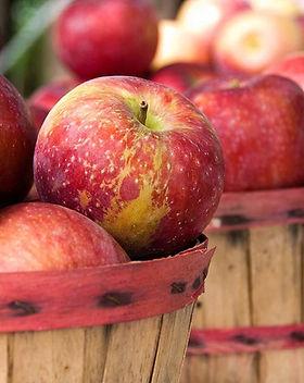 Apple-Harvest_1000px (1).jpg