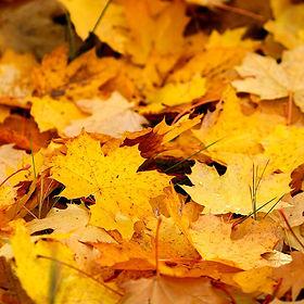 Fallen-Leaves-Fragrance-Oil.jpg