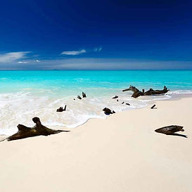 Caribbean_Teakwood_750px.jpg