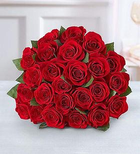 a dozen roses.jpg