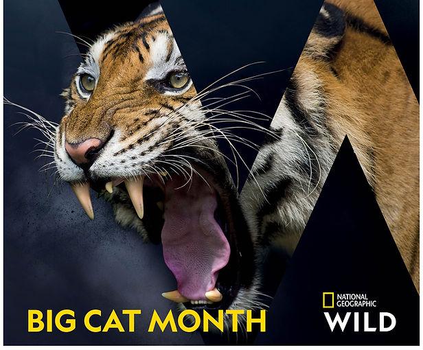 Big cat month portrait1.jpg