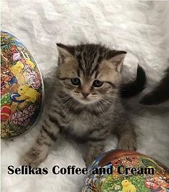 Coffe and Cream 4,5v.jpg
