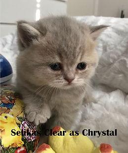 Clear as Chrystal 4,5v.jpg