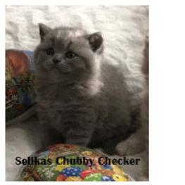 Chubby Checker 4,5v.jpg