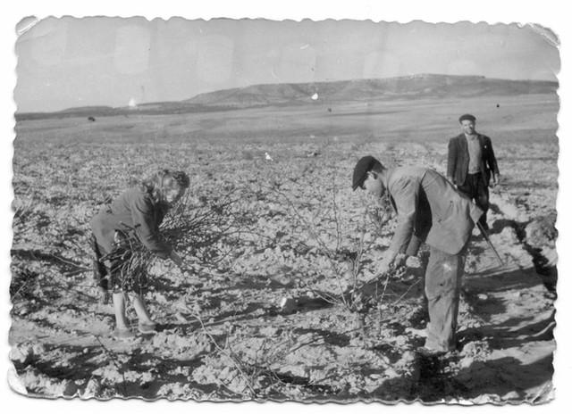 Trabajando en el campo. FotoPedro.jpg