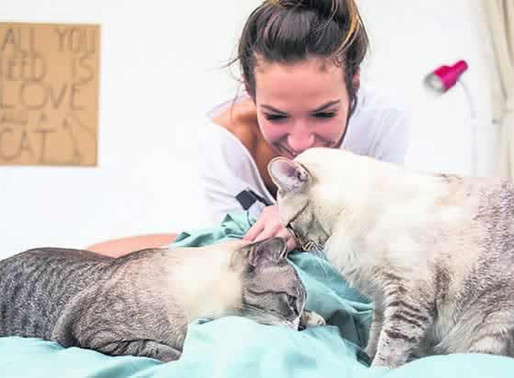 Researchers identify five types of cat owner
