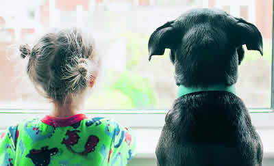 Dogs may be good for children's psychological development