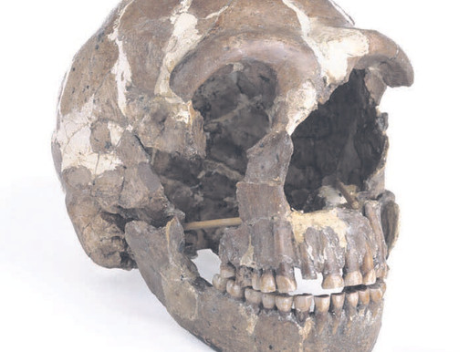 Neanderthals listened to the world much like us