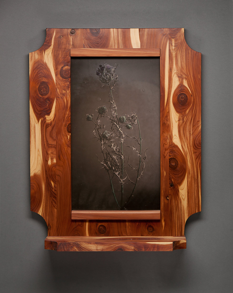 Thistle_20x24 tintype_hand colored_cedar shelf