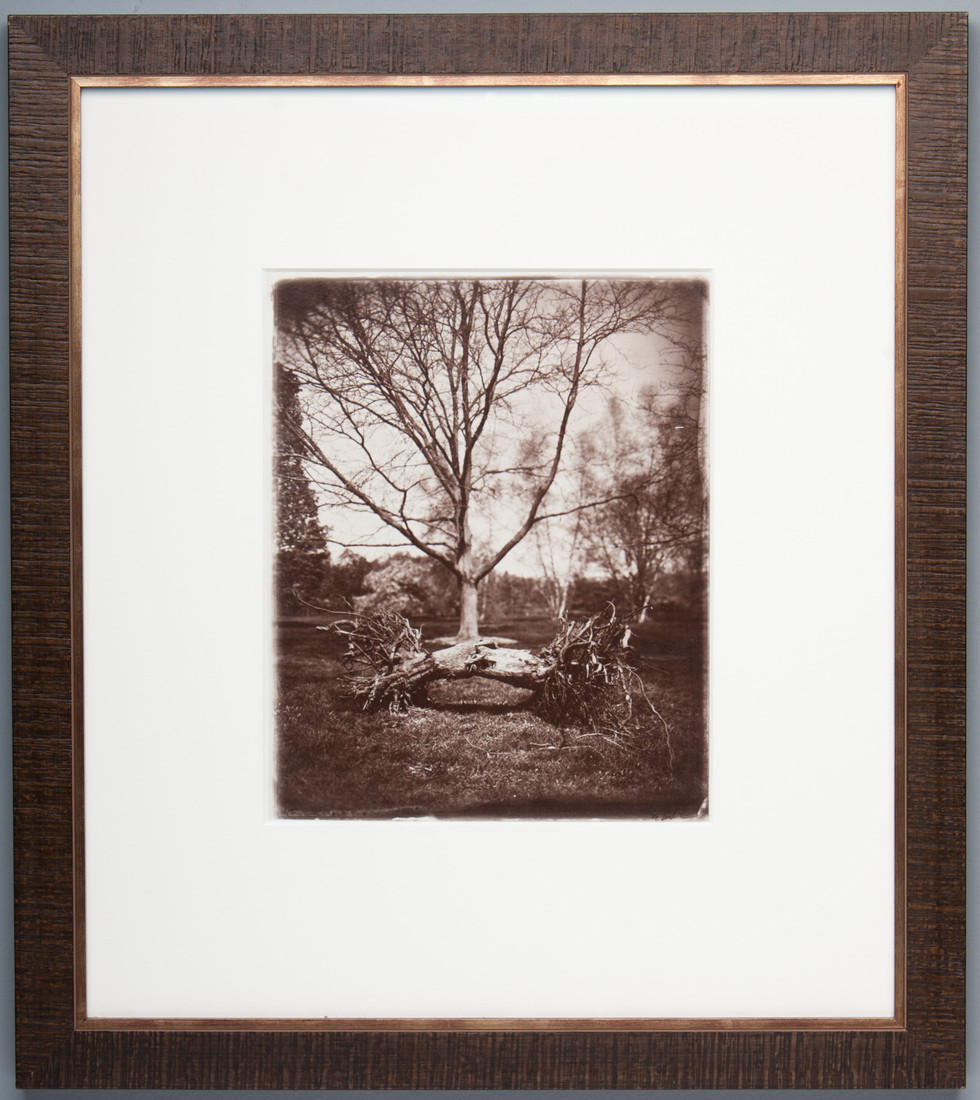 tree_albumen.jpg