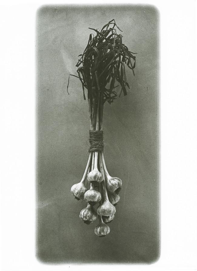 garlic_carbonprint.jpg