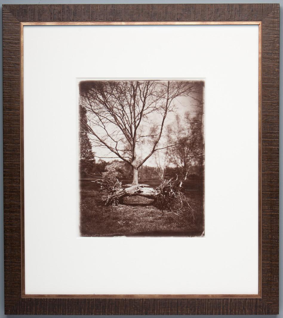 Woven Tree_albumen print