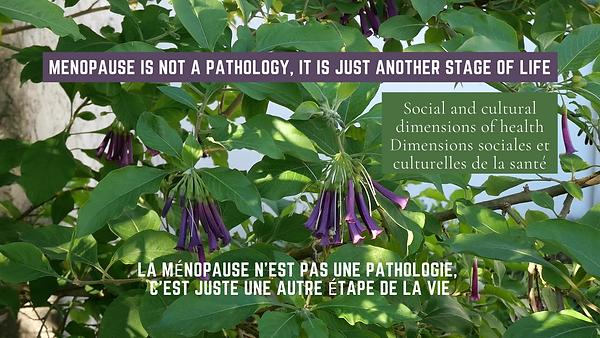 Un arbuste Iochroma en fleurs présente la ménopause sur YouTube.