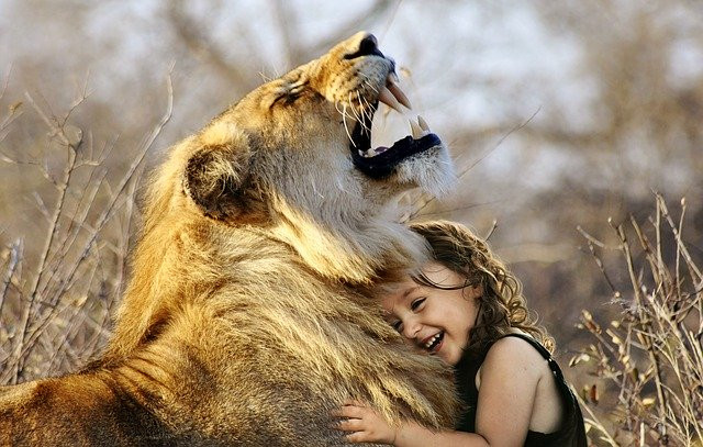 A little girl holds a lion with her arms in the savannah.