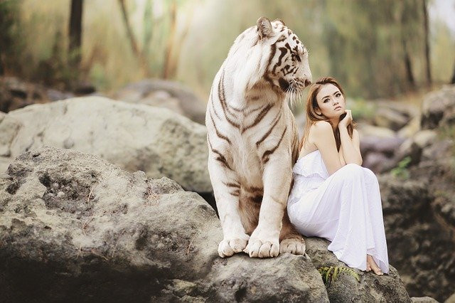 A young woman in a white dress sitting on a rock leaning on a white tiger in nature.