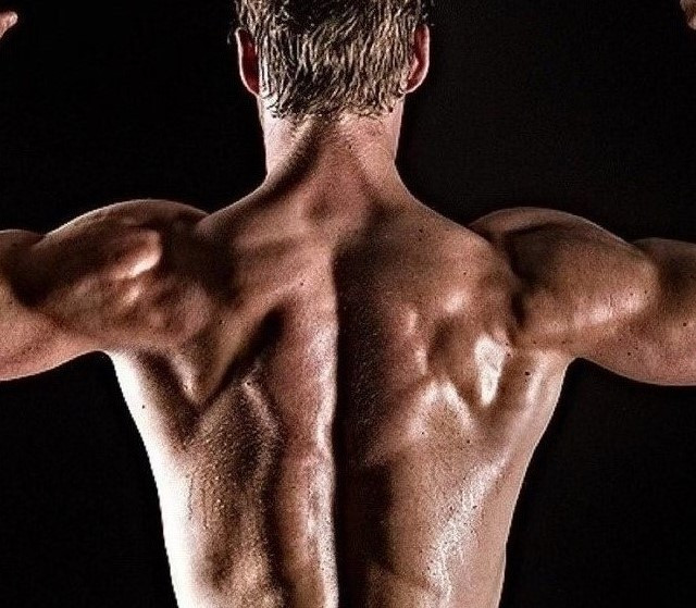 View of a man's muscle mass seen from the back