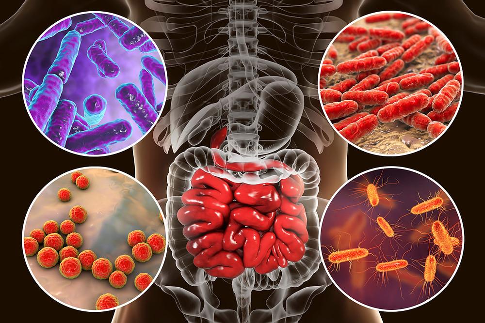 Grossissement de plusieurs bactéries dans l'Intestin de l'anatomie humain