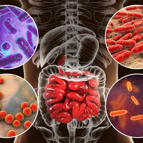 Probiotiques et magnétiseur