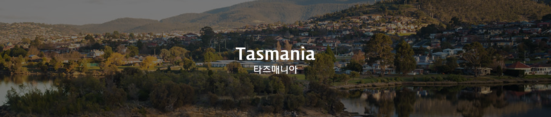 타즈매니아.png