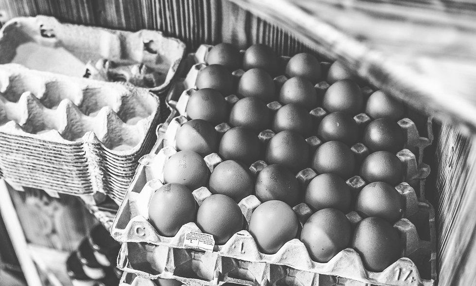 Eier vom MiBi